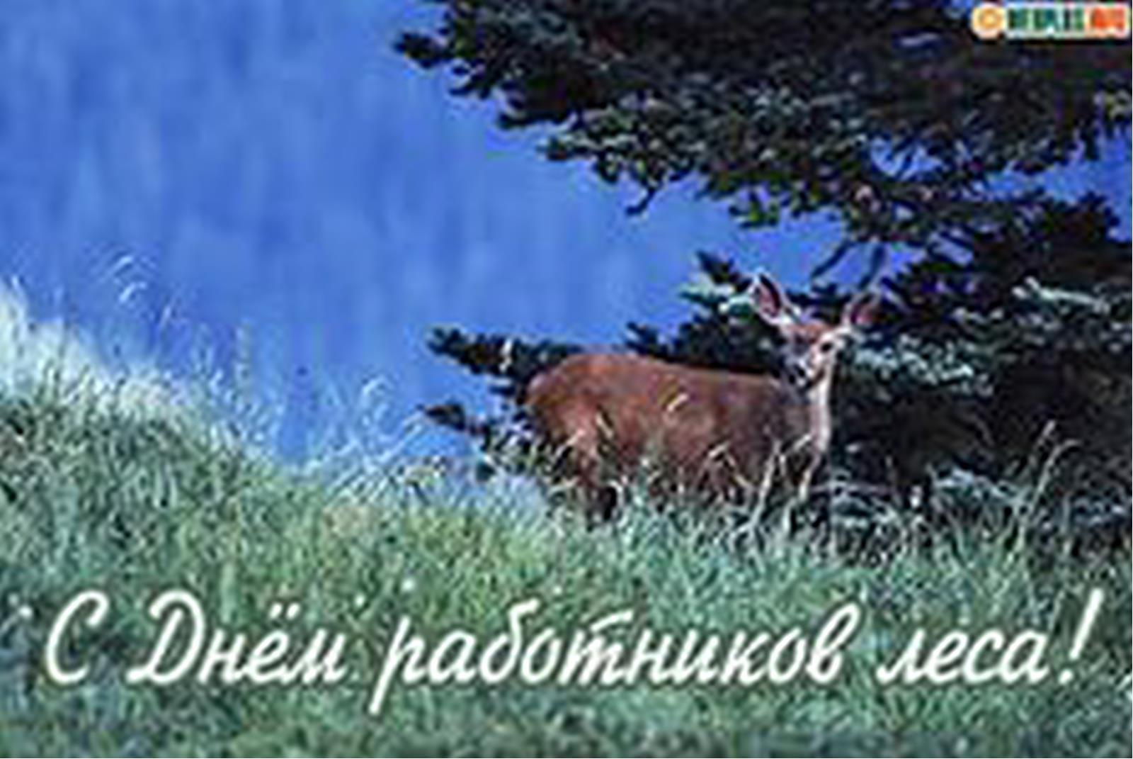 Поздравление с днем лесного хозяйства 70