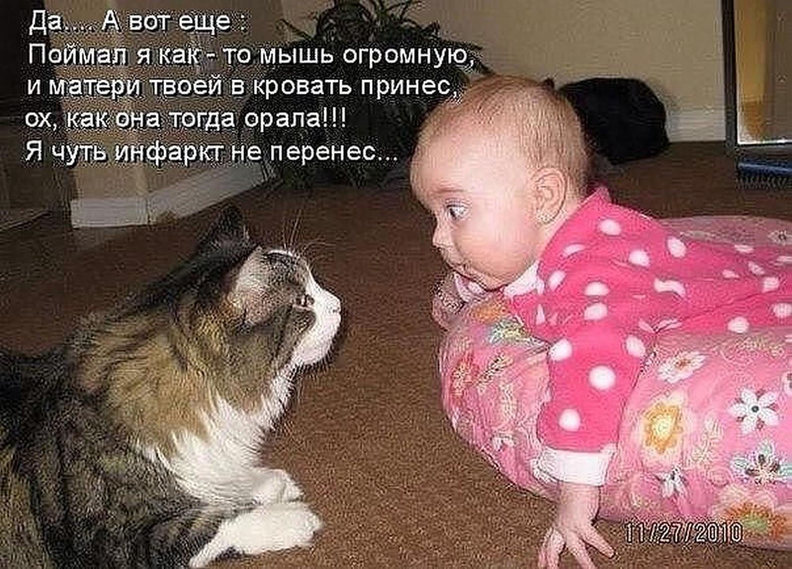 Смешные картинки котов с 59